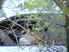 Filthy couple are having outdoor nasty sex in the car